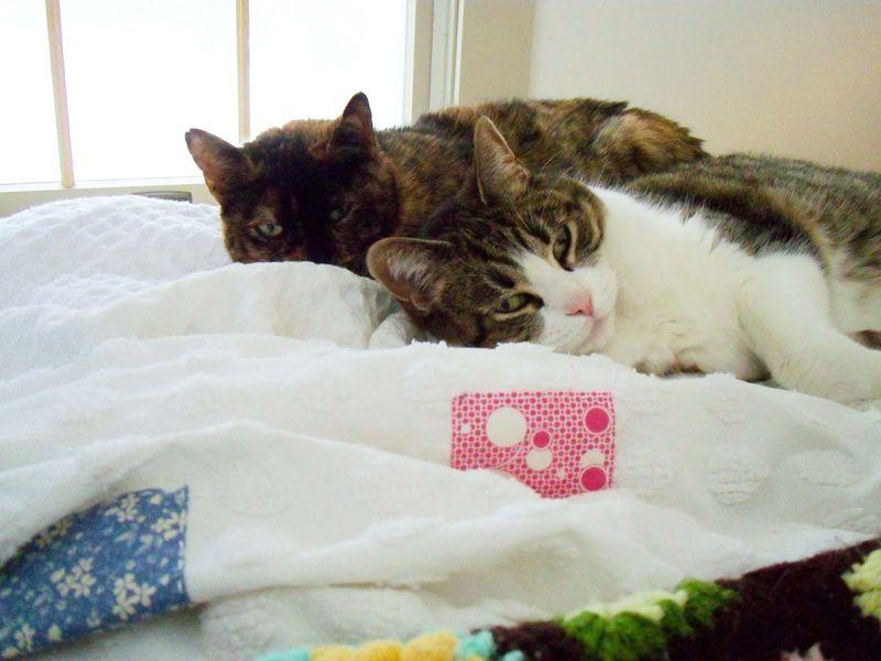 Comfy cats